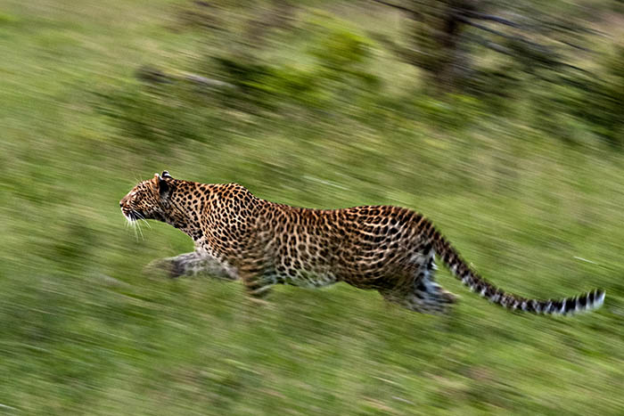 Image of: Leopard What Is The Most Difficult Animal You Have Had To Photograph u003d Nocturnal Animals The Best Photo Safari What Is The Most Difficult Animal You Have Had To Photograph
